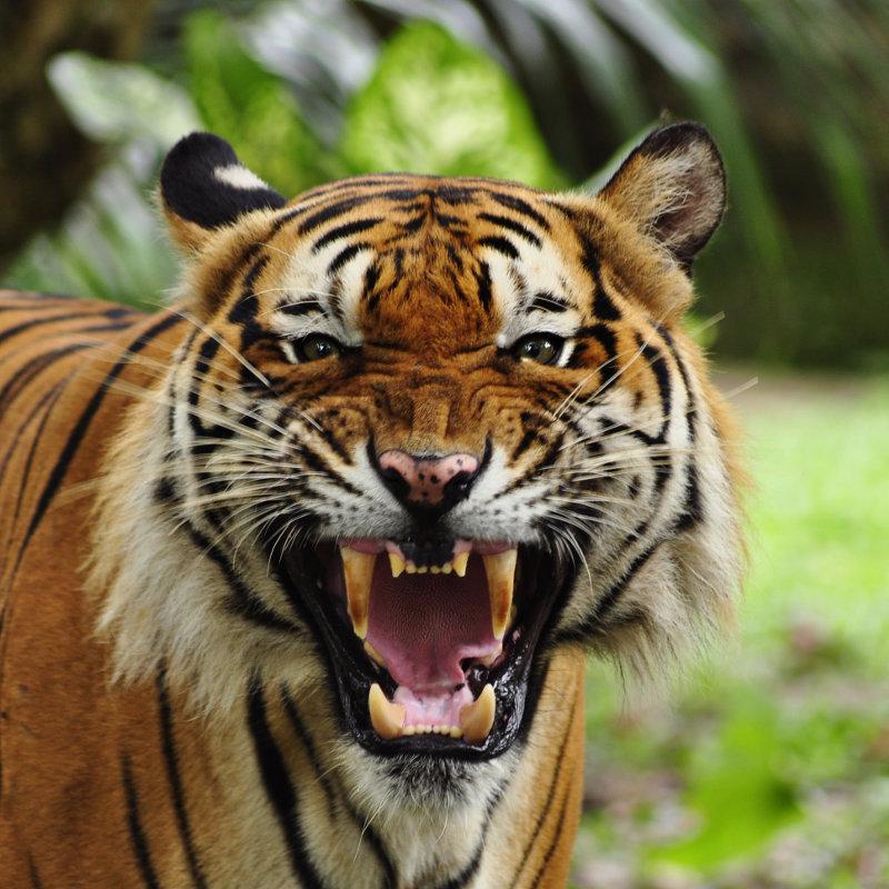 Extreem Wat zijn wilde dieren? HG76