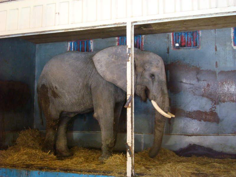 Wilde Dieren de Tent Uit, voor een circus zonder wilde dieren